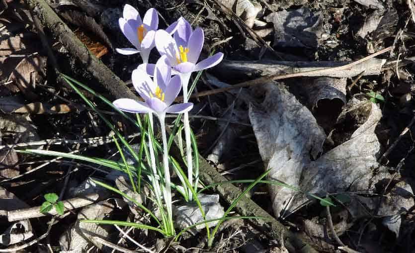 Endlich wieder Frühling – ist das nicht schön?