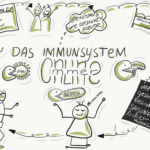Read more about the article Zirkeltraining fürs Immunsystem